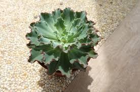 Plants That Don T Need Light Plants Gardening Is Fun
