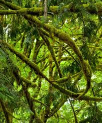 5 Dominant Plants In The Tropical Rainforest The Value Of Carbon Capture And Sequestration As An Ecosystem