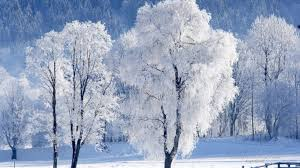 wallpaper desktop winter scenes forest wallpaper desktop riveting snow austria winter nature