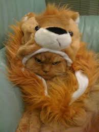 Lion King Meme Maker - grumpy cat lion king meme generator imgflip