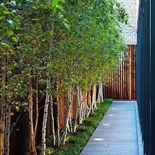 small garden trees for privacy cori u0026matt garden