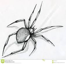 black widow spider drawing stock image image 38726231 10 day