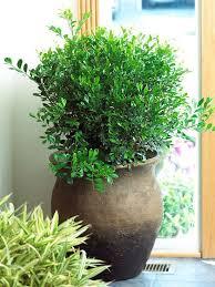 The Most Fragrant Plants - 130 best my favorite u0026 fragrant flowers u0026 plants images on