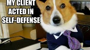 Lawyer Cat Meme - dueling memes lawyer dog vs business cat