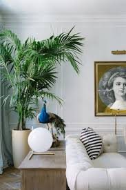 Home Plant Decor by 148 Best Interior Decorating With Palms Images On Pinterest Home