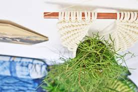 grünpflanzen im schlafzimmer grünpflanzen im schlafzimmer schlafzimmer planung und beratung