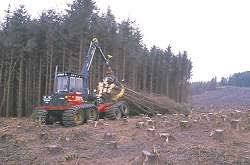 effects of harvesting practice on soil sustainability forest