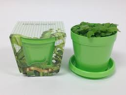 Kitchen Herb Garden Kit by W6122 Sweet Basil Herb Mini Grow Kit With Green Pot Saucer 4