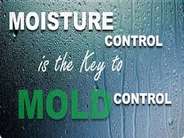 How To Stop Mold In Basement by 10 Ways To Prevent Basement Mold U2013 Commonwealth Insurance