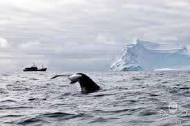 sea shepherd conservation society the whale wars continue