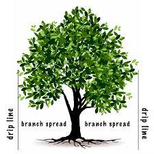 amazon com jobe u0027s tree fertilizer spikes 16 4 4 time release