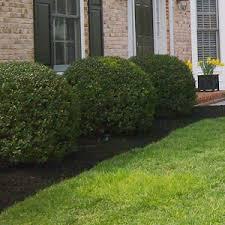 Bushes For Landscaping Garden Design Garden Design With Bushes For Landscaping Healthy
