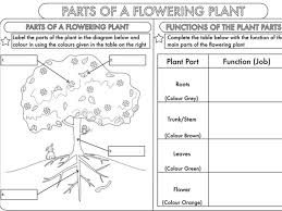 science bundle living processes for years 3 and 4 by beckystoke