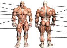 Full Body Muscle Anatomy Usa Olympic Track And Field Athletes 2012 Olympics Track