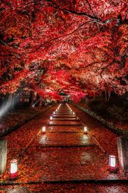 best 25 red leaves ideas on pinterest autumn leaves fall trees