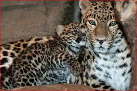 Arkansas wildlife images Arkansas wildlife refuge rescuing big cats from colorado JPG