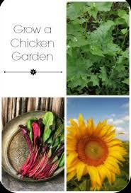 best 25 organic chicken feed ideas on pinterest quail feed