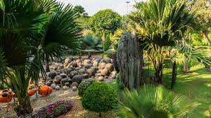 Tropical Rock Garden Rock Garden Of Park Nong Nooch Tropical Garden Thailand Stock