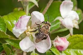 bee blog u2013 ne pollinator partnership