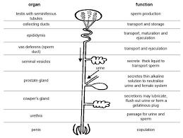 label skin diagram worksheet human anatomy body