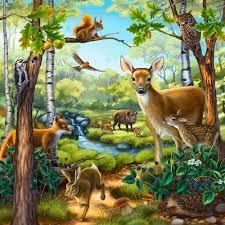 wertheim illustration animals u0026 plants