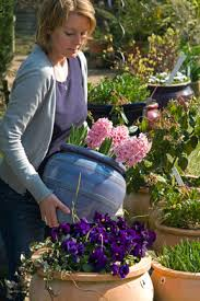 containers winter selection rhs gardening