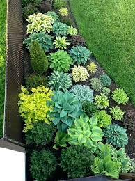 Rock Garden Plants Uk Green Plants For Garden Flower Green Plants For Small Gardens