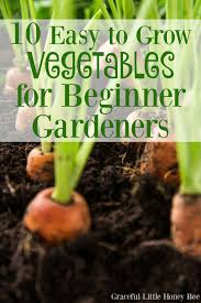 How To Grow Vegetables by Vegetable Garden Design How To Gardens Start A Garden Trends