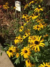 illinois native plant guide wild ones west cook wild ones