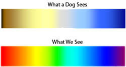 Green Red Color Blind Is My Dog Color Blind Color Blindness Charts Show How Your Dog