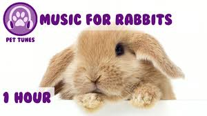 1 hour of bunny music music to relax your pet rabbit youtube
