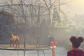 boxer dog xmas john lewis christmas advert 2016 buster the boxer dog stars in ad