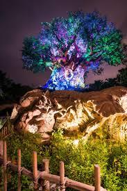 Map Of Animal Kingdom 25 Best Animal Kingdom Ideas On Pinterest Disney Animal Kingdom