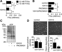 tissue factor prothrombotic activity is regulated by integrin arf6