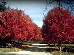 ornamental trees complete land sculpture