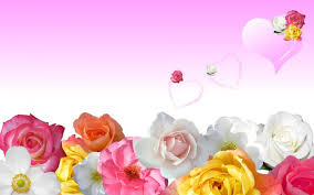 background valentine flower backgrounds wallpapers px flower