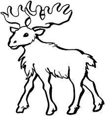 moose in the forest free animal coloring pages inside animals