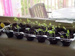 indoor gardening explore best indoor gardening ideas