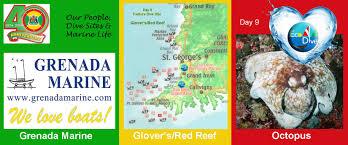 day 9 grenada marine dive site red reef u0026 feature creature the