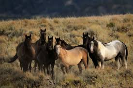 Colorado wild animals images U s court of appeals in denver hears arguments over removal of jpg