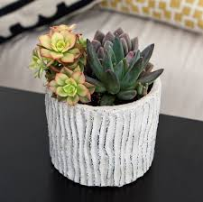benefits of succulents u0026 cacti indoors giving plants blog