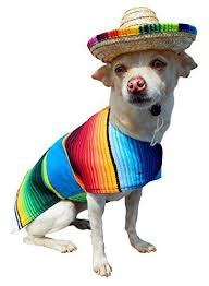 Cheap Dog Costumes Halloween 47 Halloween Dog Costumes Ideas 2017 Images