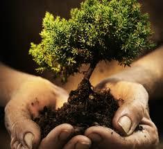 plant a tree today save your generation tomorrow creofire