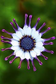 282 best garden ideas images on pinterest garden ideas flower