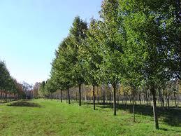 tree farm wholesale distribution center central nurseries