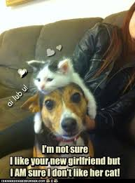 Dog Girlfriend Meme - 100 percent sure i has a hotdog dog pictures funny pictures