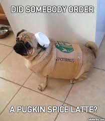 Autumn Memes - hilariously counting down to autumn pumpkin spice funnies