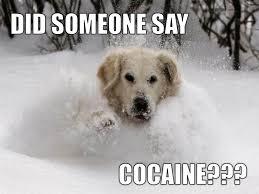 Bear Cocaine Meme - idaho radio singing about sex is forbidden but cocaine is ok