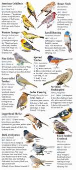 Nevada Birds images Birds of nevada quick reference publishing jpg