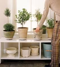 plante de bureau feng shui the 25 best feng shui office plants ideas on feng